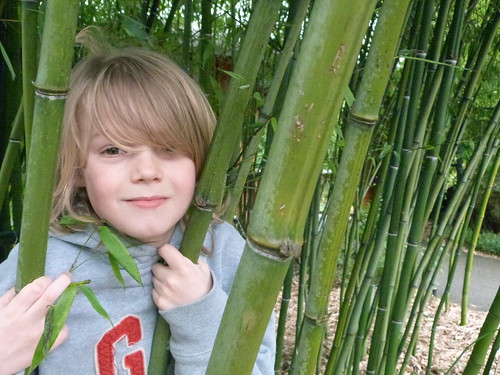 Nels In The Bamboo