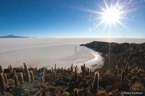 cactus sun sunrise island desert salt bolivia saline uyuni potosidepartment