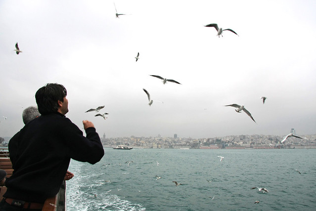 Seagulls following the ferryboat, Istanbul, Turkey イスタンブール、フェリーに付いてくるカモメたち