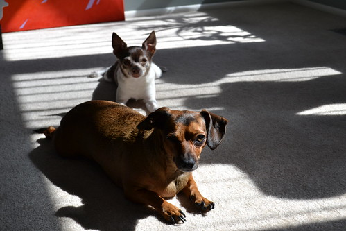 Kio and Omi Sunbathing