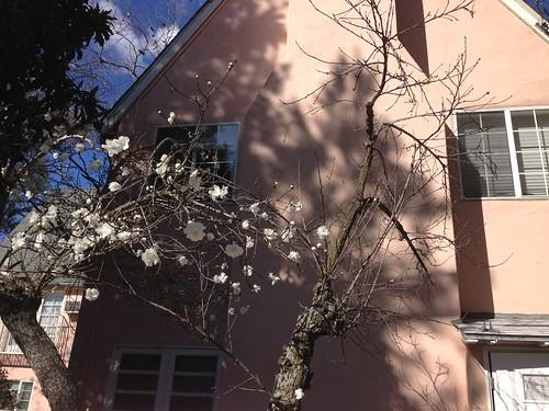 spring burstin out