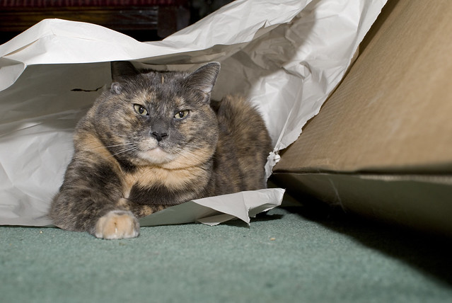 20130318 - Cat Fort