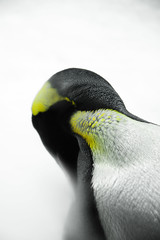 wing(0.0), toucan(0.0), beak(0.0), animal(1.0), yellow(1.0), penguin(1.0), flightless bird(1.0), green(1.0), fauna(1.0), close-up(1.0), bird(1.0),