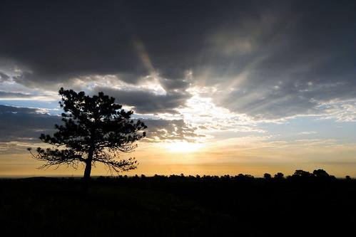 morning blue trees clouds sunrise golden flora colorado unitedstates boulder sunrays ponderosapines