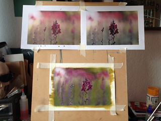 Salvia - work in progress & finished (20 March 2012)