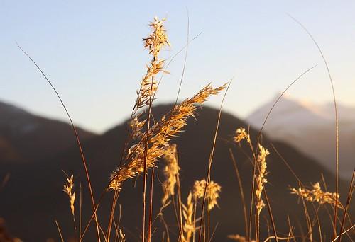 montagne mountain automne autumn fall 74 herbe herbefolle sunset nature lumière light autofocus thegalaxy hautesavoie france coucherdesoleil plateaudassy grass