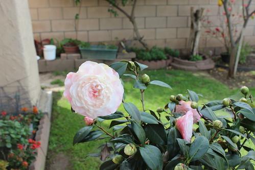 around the garden