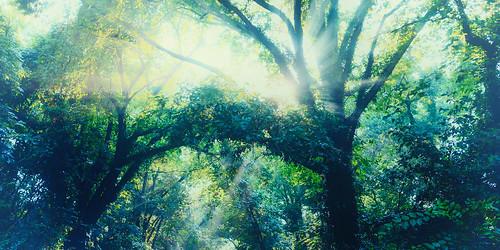 light bw sun nature journey inspirational spiritual canopy polarizer circular mrc kaesemann fujix100