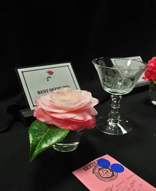 Camellia Seedling