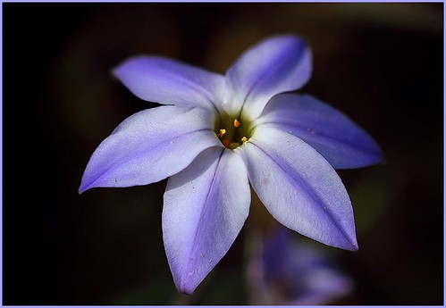 Spring star by T.takako
