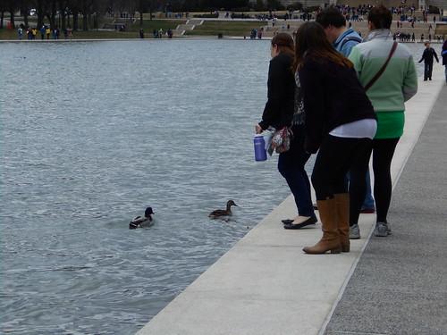 duck feeding (1)