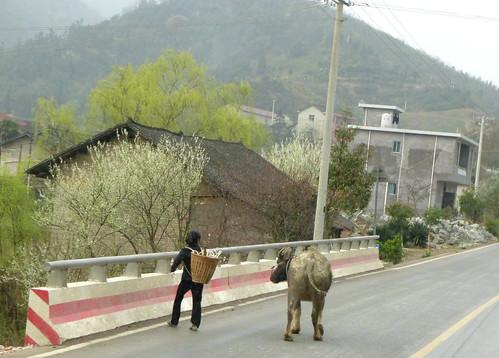 Hunan13-Zhangjiajie-Fenghuang-Bus (32)