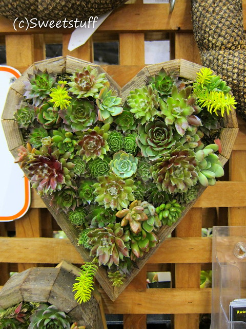 Vertical heart from Succulent Gardens