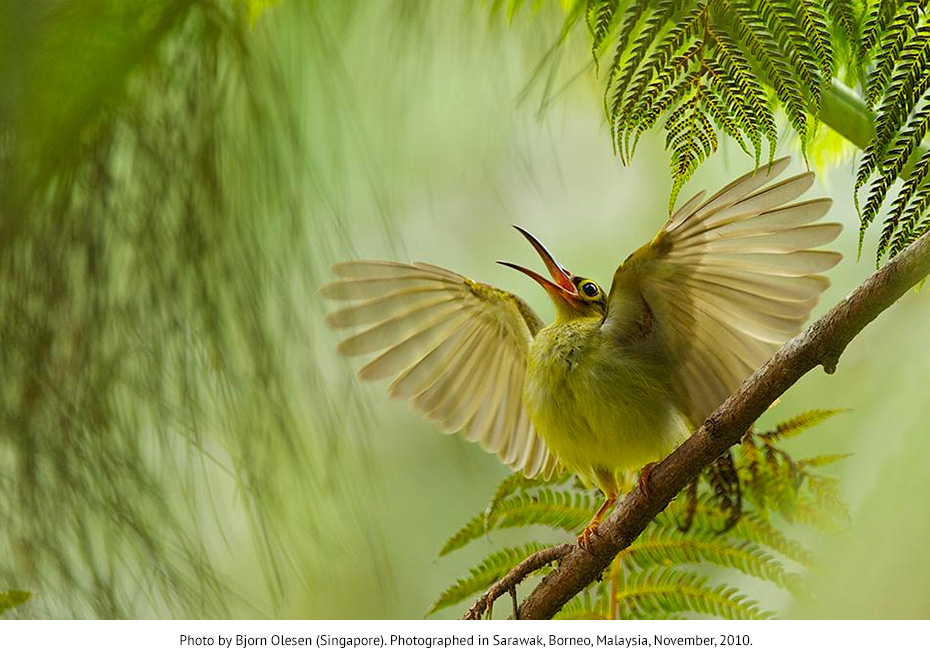 Smithsonian Magazine 2012 Photography Contest - 'The Natural World'