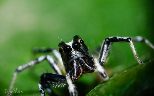 eyebrow spider (2 of 4)