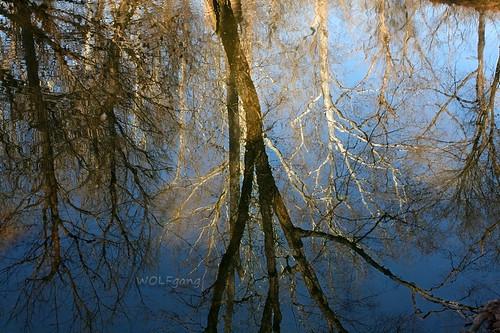 autumn trees reflection virginia civilwar