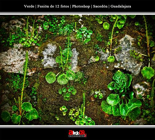 Verde | Fusión de 12 imagenes | Sacedón | Guadalajara by alrojo09