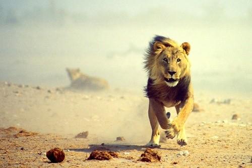 雄狮的奔跑人生