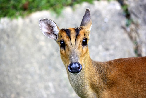 interesting deer-like animal
