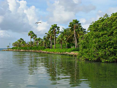 trees bird water birds landscape island pelican aruba palmtrees inlet caribbean netherlandsantilles bonbini dutchantilles lesserantilles dutchcaribbean abcislands leewardantilles caribbeannetherlands orangjestad