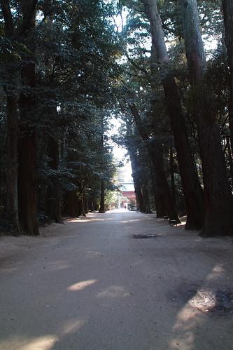 鹿島神宮参道の木々 by leicadaisuki