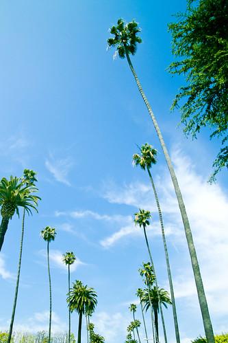 california-3653-1