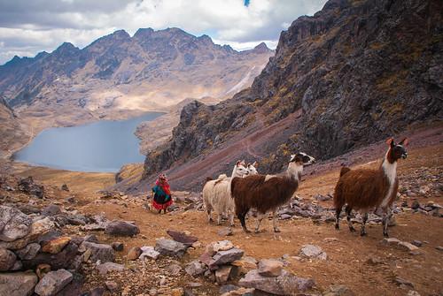 Trekking Llamas by FRAENA
