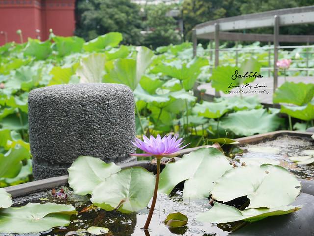 台北一日遊景點推薦植物園荷花蓮花池 (36)