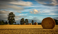 Harvest in Worcestershire