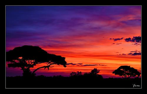 africa travel trees sunset sky naturaleza nature landscape atardecer nikon arboles delta paisaje cielo nubes vacaciones ocaso yara mygearandme besteverexcellencegallery