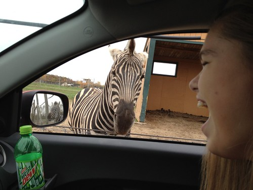 Happy teenager at the African Safari Wildlife Park