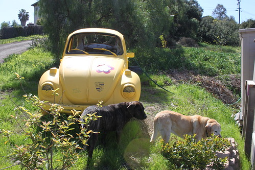 dogs and the VW
