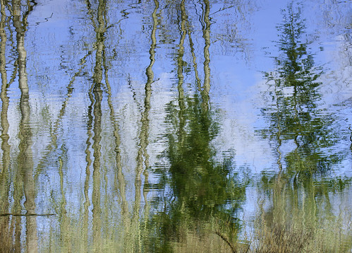 blue trees sky lake reflection nature water artistic impressionism challengeyouwinner fotocompetitionbronze creativephotocafe msh0713 msh07134