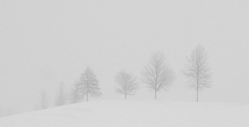 trees usa snow landscape panoramic pa buckscounty uppermakefield