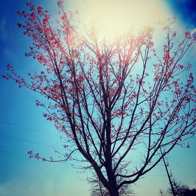 69.365 {Bloomin'}