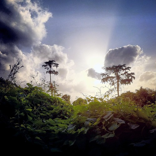 [フリー画像素材] 自然風景, 空, 雲, 草原・草, 風景 - オーストラリア ID:201303230600