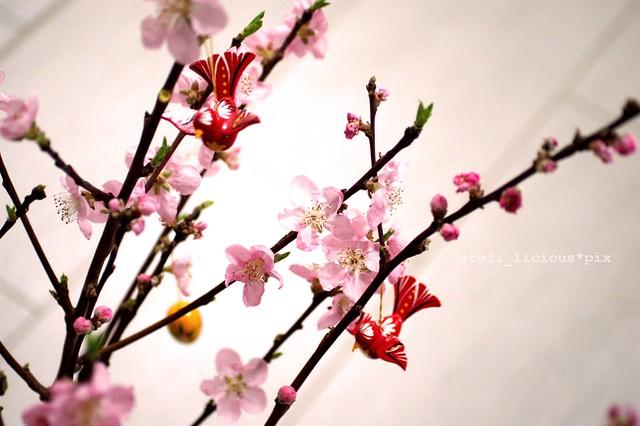 cherry_bird_2