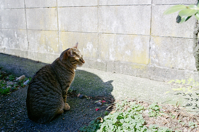狩り / Hunting 4/4