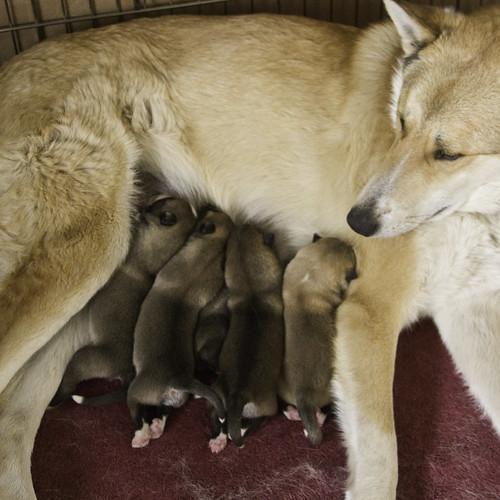 Kilbe-Pups-2