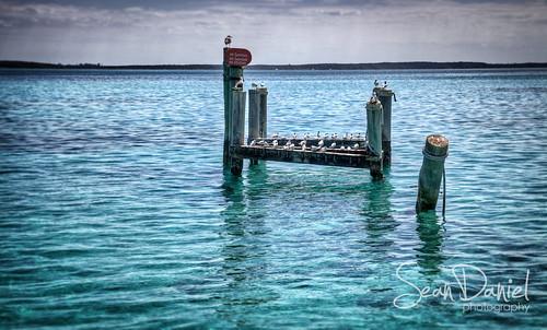 Seagull Island by Sean Daniel