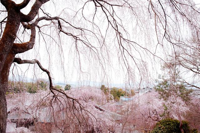 京都天竜寺