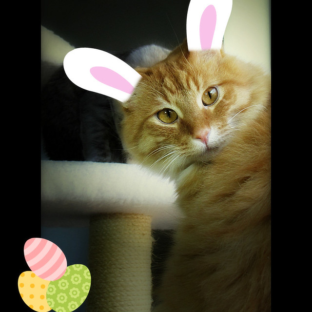 The Easter Kitty :)