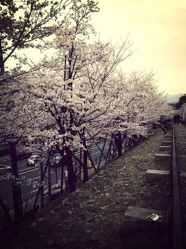100 愉快的蹴上鐵道與京都御院野餐