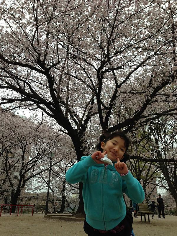 一ツ木公園で花見をしたよ