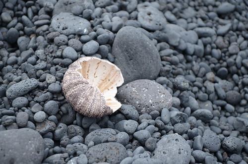 Hawaii 279
