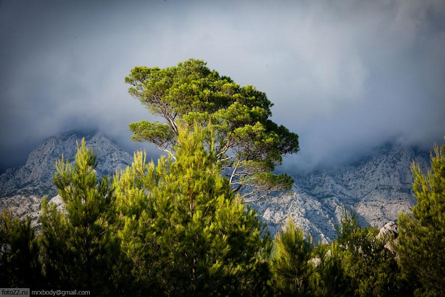 23-Wild-Makarska