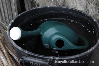 Spring Planting Update: Rain Barrel