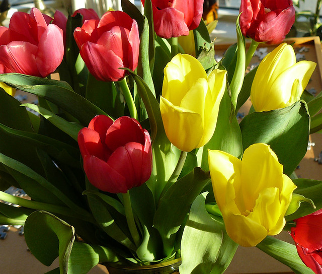 4-17 tulips 1