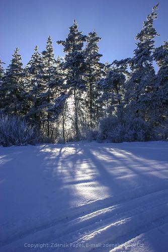 Winter, Böhmerwald by Zdenek Papes