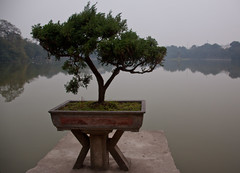 Bonzai Tree on Jade Island on Hoan Kiem Lake - Hanoi, Vietnam